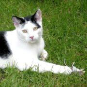 Katzenpsychologie-Wedel: Katzen und Mäuse