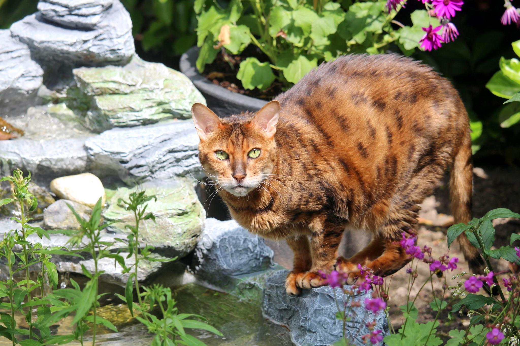 Katzenpsychologie-Wedel: Tierfotografie