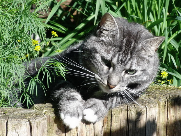 Katzenpsychologie-Wedel: Jessie Palisaden