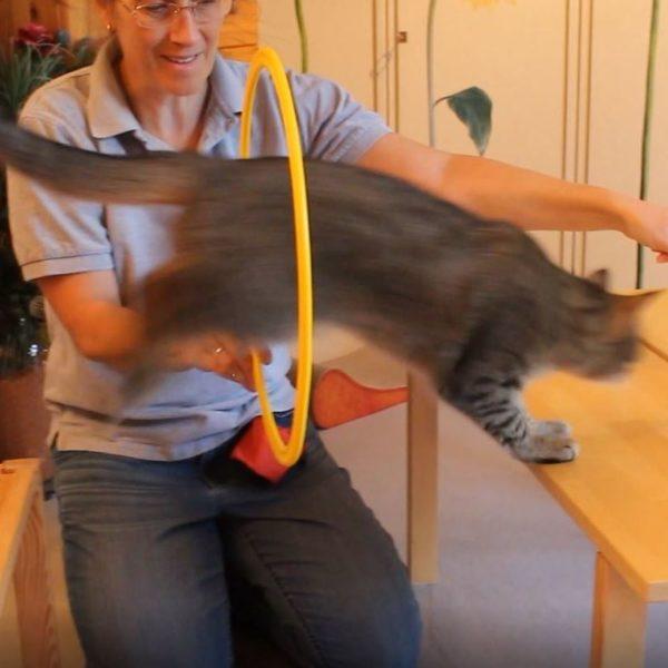 Katzenpsychologie-Wedel: Clickertraining