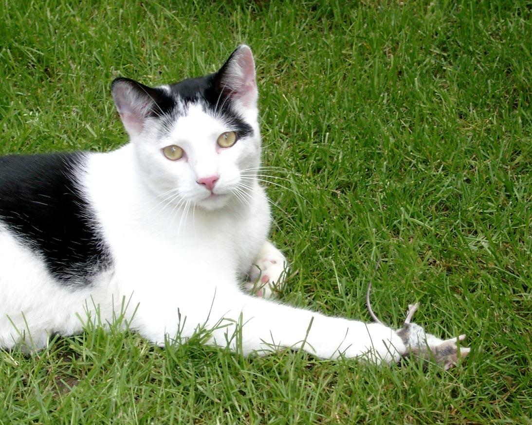 Katzenpsychologie-Wedel: artgerechte Ernährung