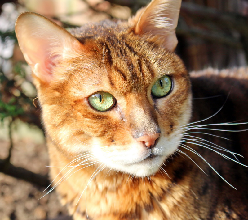 Katzenpsychologie-Wedel: Mystery Muschelzypresse