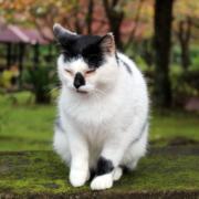 Katzenpsychologie-Wedel: Katzenschnupfen