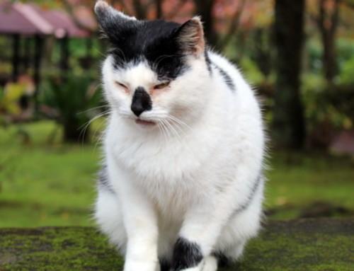 Informationen zum Katzenschnupfen-Komplex