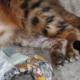 Katzenpsychologie-Wedel: Hautpilz